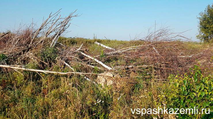 измельчение дерева и кустарников